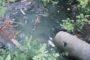 Когда канализационные стоки перестанут сливать в ручей?