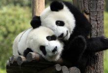 Зоомузей приглашает на экскурсию «Романтика в мире животных»