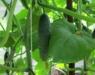 Нововятских садоводов приглашают обновить свои знания