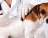 В Нововятском районе вакцинируют домашних питомцев