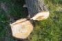 Как урегулировать вопрос сноса дерева с управляющей компанией?