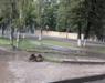 В Нововятске лужу у «Пятерочки» пообещали убрать в течение двух месяцев