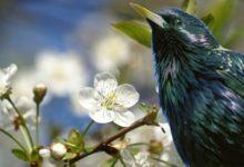 Музейное занятие «Весенние прилёты птиц»
